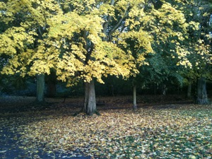Hampstead_heath_autumun